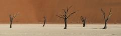 Deadvlei Sentinels