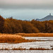 winter on the Somerset Levels