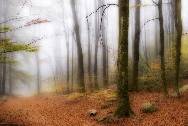 Bosque encantado¡¡¡ _XT20268