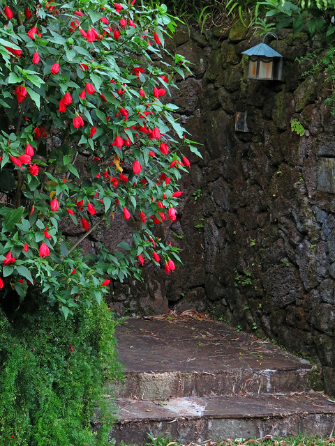 Hibiscus Entry