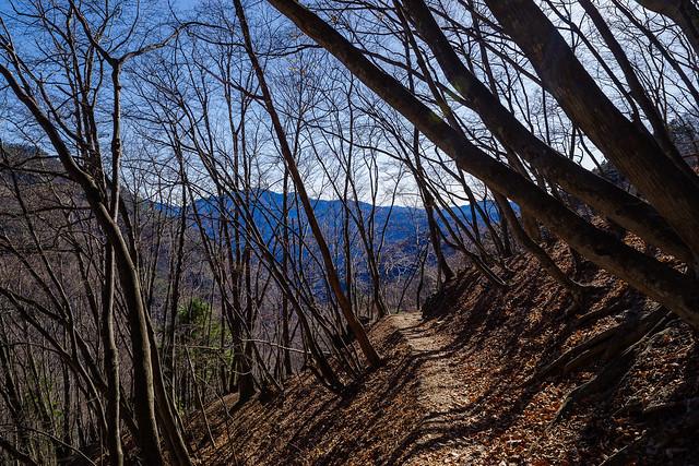 長い樹林帯の道を下る