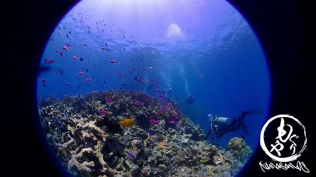 浅場はサンゴに熱帯魚たくさん♪