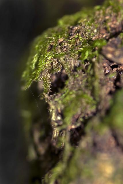 Tree moss - Face?