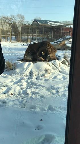Snowy zoo trip