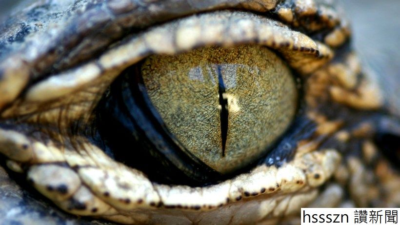 reptilian-aliens_820_461