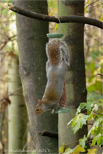 Squirrel...Mission Possible