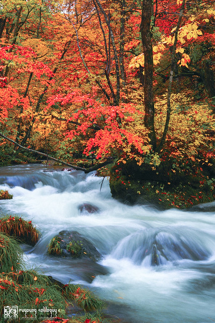 秋色是山巒中的一抹紅 | 14