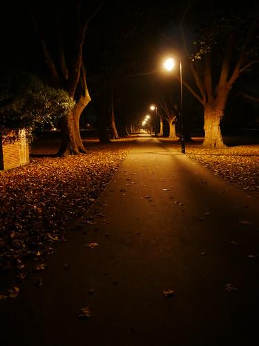 Jesus Green at Night