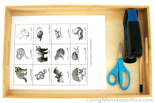 Tray for Making an Animals That Hibernate Mini-Book