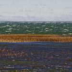 Wind+Blown+Bay