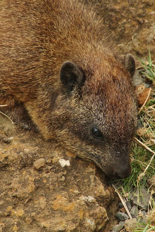 Small Kenyan Mammals