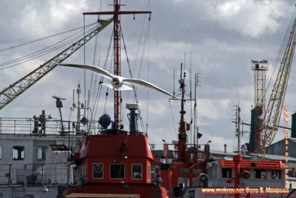 Калининградский торговый порт. фотографии