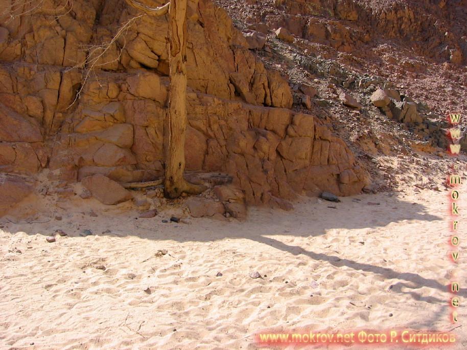 Синайская пустыня и фотограф
