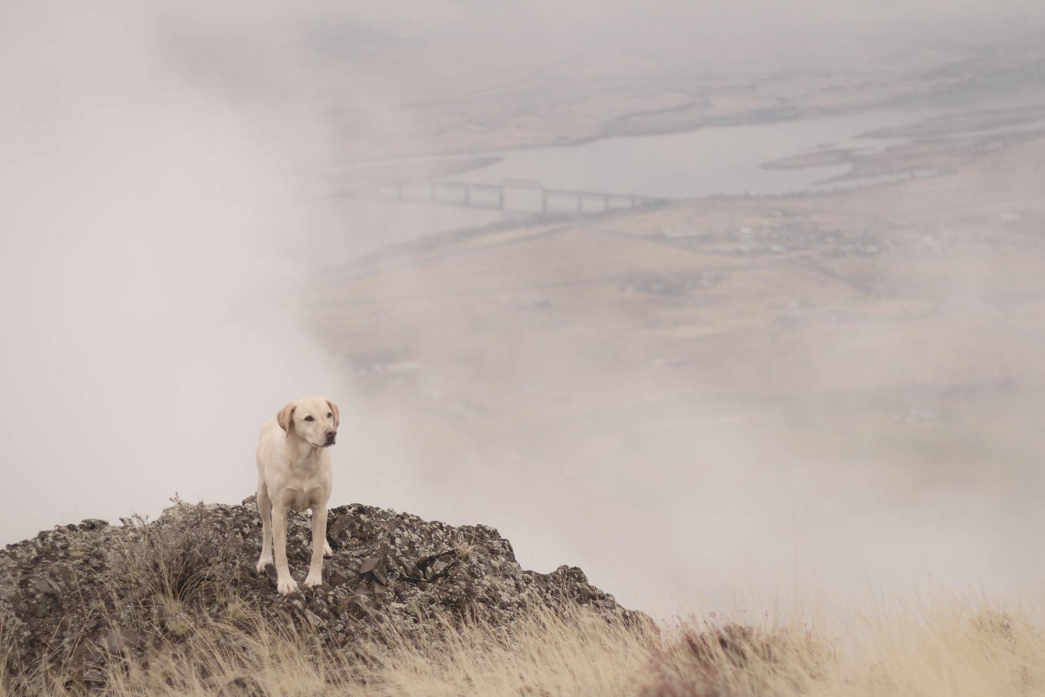 Summit dogs on Sentinel Mountain