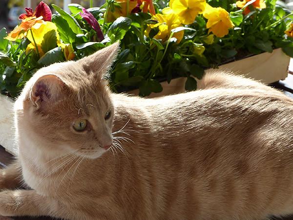gardien des fleurs