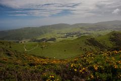 Skyline Track - Wellington
