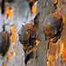Rusted Rivets Abstract 2 of 2