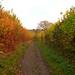 Autumn Estate Walks