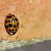 Ladybird Butt!