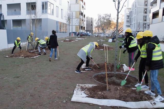 Des arbres plantés par les élèves du collège Jean Mermoz