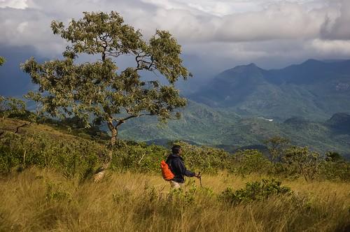 mancholai kuthuraivetti tirunelveli nellai tamilnadu southindia enchantingtamilnadu travel tourism forest muthukumar yesmkphotography photographer nature nikon d90 i am