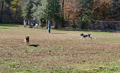 Turkey Hill Dog Park 83