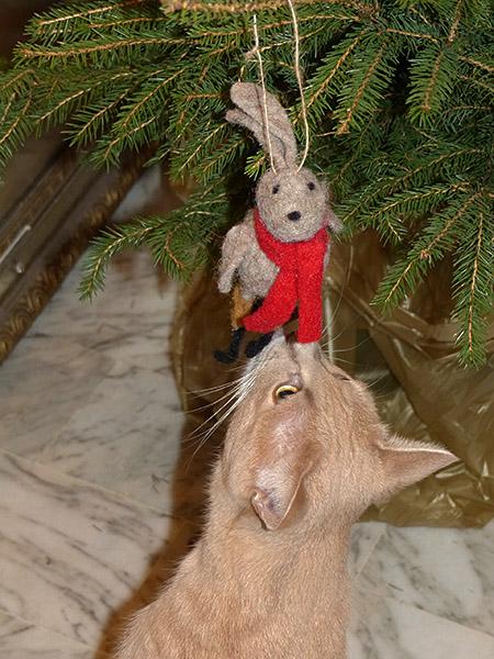 petit chat et petit lapin