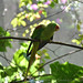 <p><a href=&quot;http://www.flickr.com/people/140820502@N08/&quot;>exploreslk</a> posted a photo:</p>&#xA;&#xA;<p><a href=&quot;http://www.flickr.com/photos/140820502@N08/24142328987/&quot; title=&quot;Shouting parrot&quot;><img src=&quot;http://farm5.staticflickr.com/4537/24142328987_c52a212f32_m.jpg&quot; width=&quot;240&quot; height=&quot;160&quot; alt=&quot;Shouting parrot&quot; /></a></p>&#xA;&#xA;<p>Click to read more on <a href=&quot;http://exploreslk.com/dehiwala-zoo/&quot; rel=&quot;nofollow&quot;>Dehiwala Zoo</a>. <br />&#xA;<br />&#xA;Feel free to use this image, but give credits to <a href=&quot;http://exploreslk.com/&quot; rel=&quot;nofollow&quot;>exploreslk.com</a>.</p>