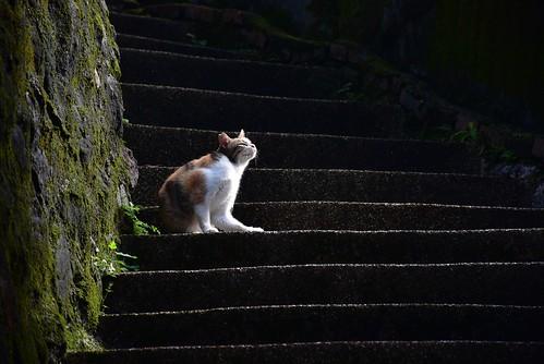 無耳茶壺山步道-勸濟堂-貓