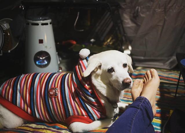 20171208 最愛冷冷的冬天露營 #歐北露 #campingwithdogs #campinglife #ilovecamping #林球子 #暖爐 #TurmofenL51