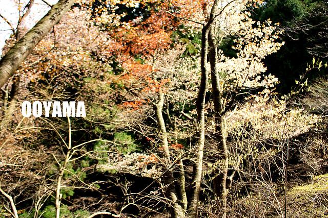 20111201_日帰り登山(大山)