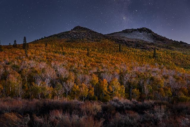 Aspen Trees on an Autumn Night