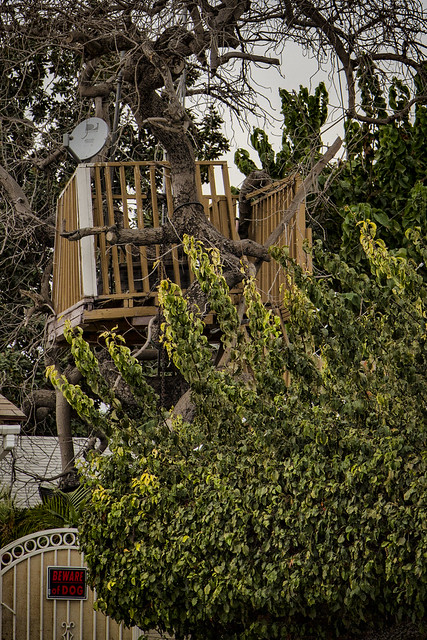 Tree house with a dish