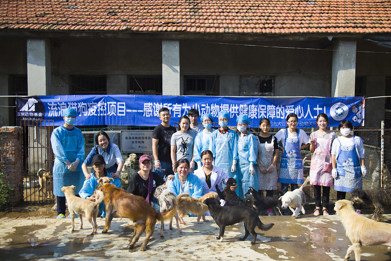 Vaccination in Hefei Canine Association Animal Care Center in Hefei city, September, 2017.