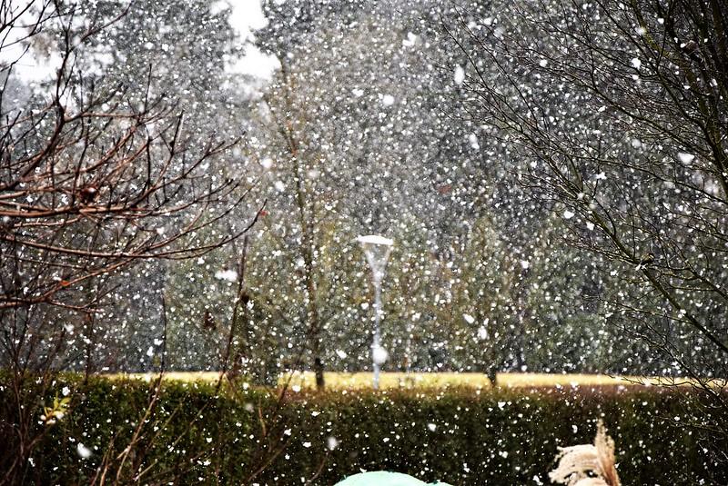 Snow 26.11 (2)