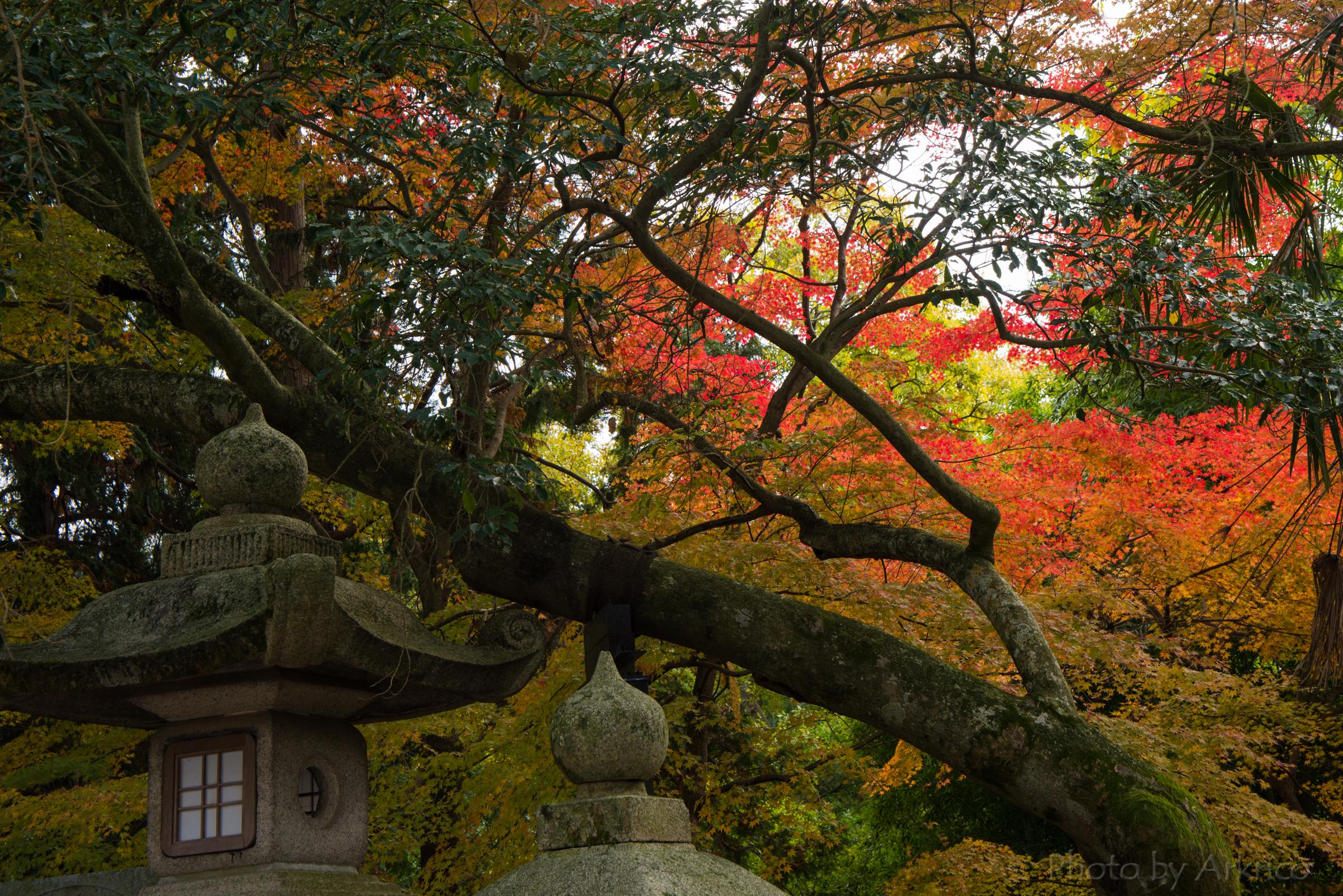 Autumn tints (2)