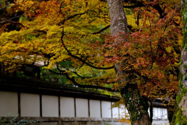 正暦寺 (Shoryaku-temple, Nara, JAPAN)