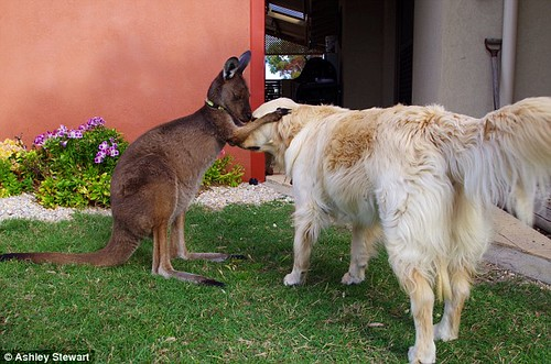 Lilly and Dusty the kangaroo