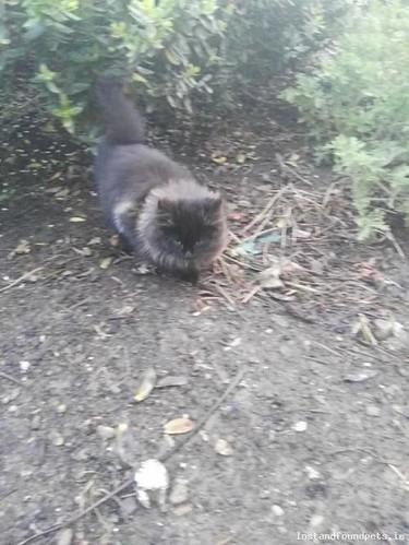 Thu, Nov 23rd, 2017 Found Male Cat - The Avenue, Piltown, Kilkenny