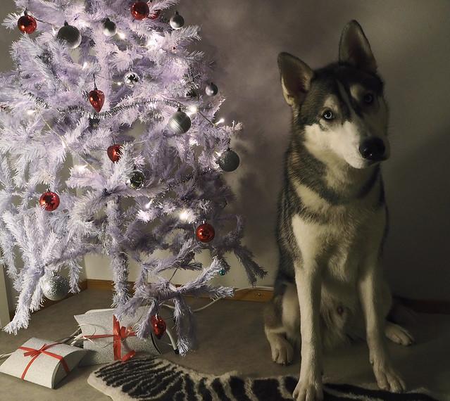 joulubamse2