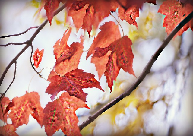 Love the trees until the leaves fall off, then encourage them to try again next year!       Chad Sugg