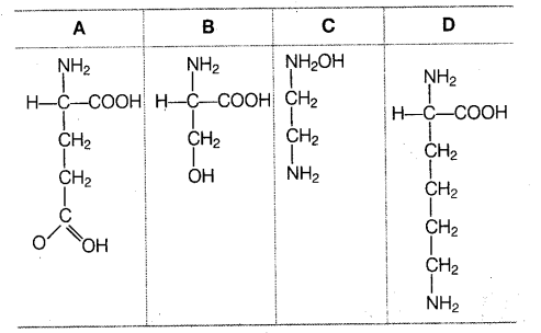 neet-biology-chapter-wise-mock-test-biomolecules-and-enzymes-91