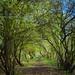 Overgrown toepath #2