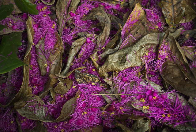 purple forest floor