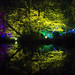 Syon Enchanted Woodland reflections