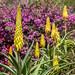 Flower Fascination... by Rainer Fritz