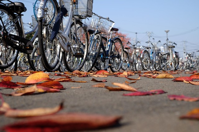 Leaves and bikes