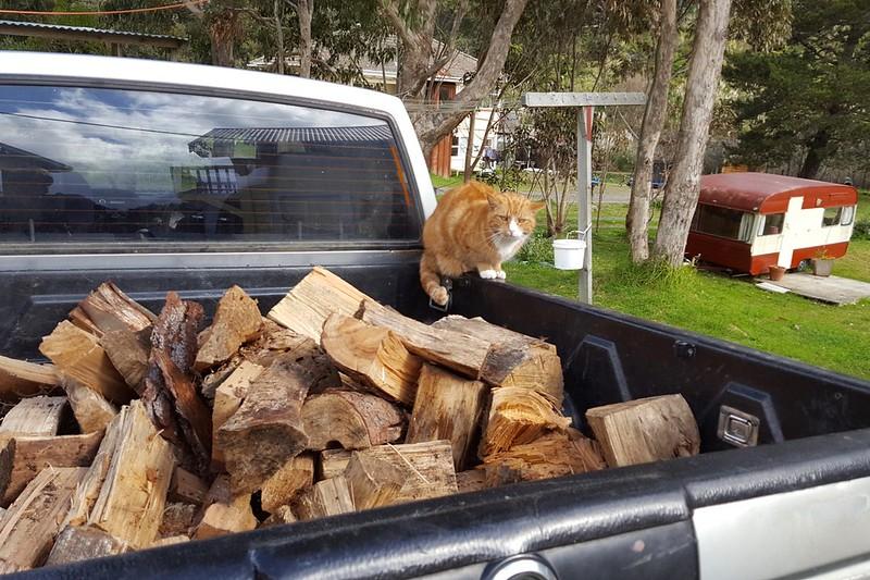 Kitty hilft beim Holz auffüllen indem sie auf wichtigeres drängt. Kuscheln!