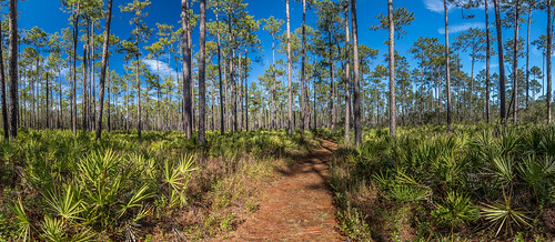 purple canon 80d florida gainesville morningside morningsidenaturecenter trail panorama nature outdoors landscape