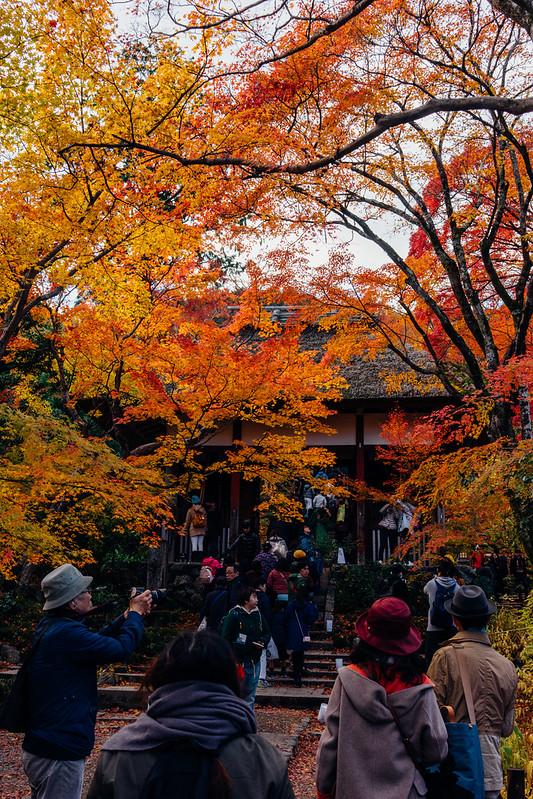 Kyoto_Jyojyakko-ji_02